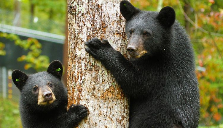 It's Bear Time - Tips On How To Be Bear Smart